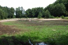 Wroński - staw bez wody, 2008
