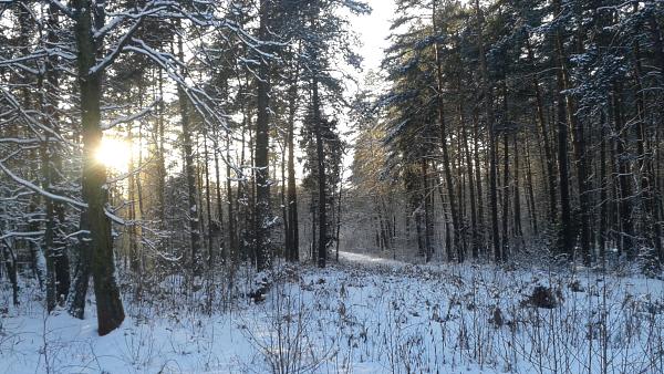 zima_puszcza_dulowska