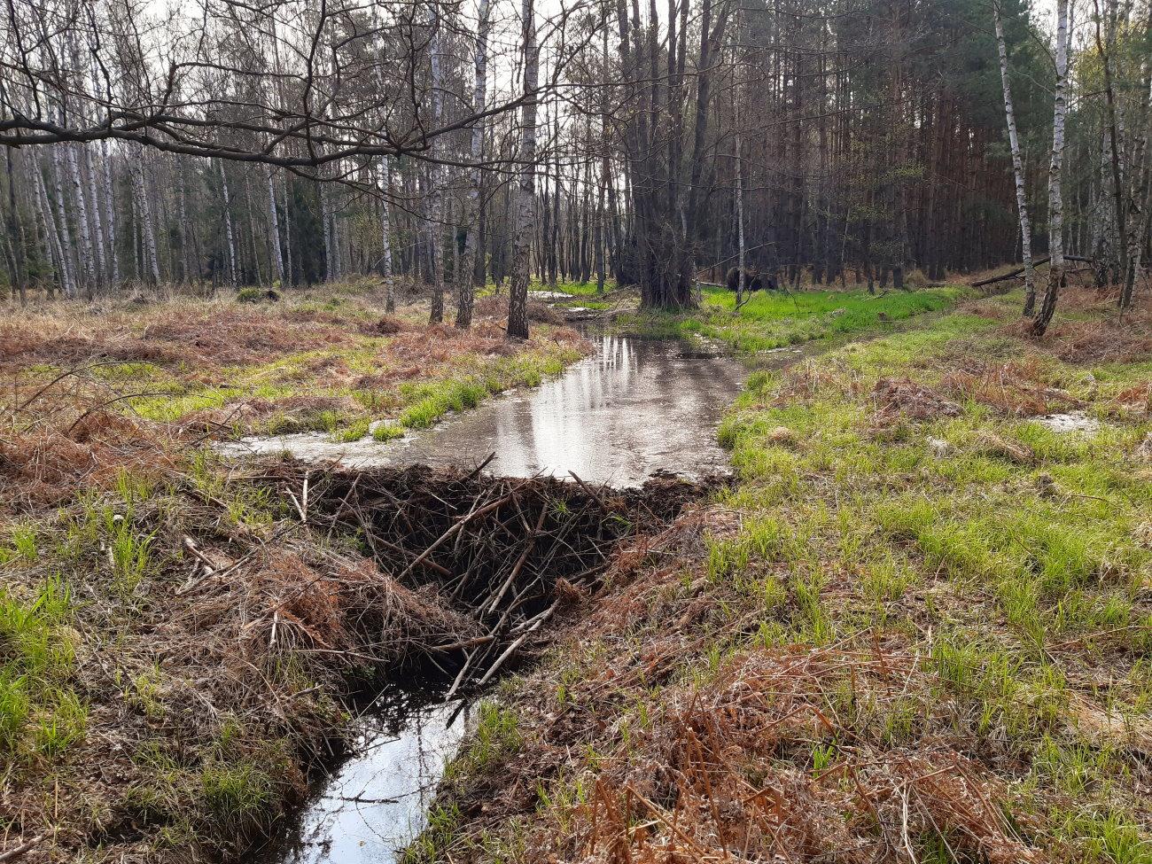 bobrowe żeremia w Tenczyńskim Parku Krajobrazowym